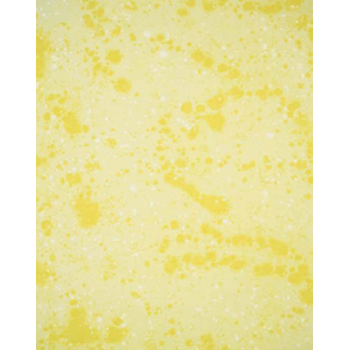 FONDALE IN COTONE BACKDROP PORTRAIT YELLOW 120x120cm art. 08200